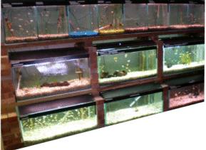 Tropical Fish,  Marine Fish and Fresh Water Fish