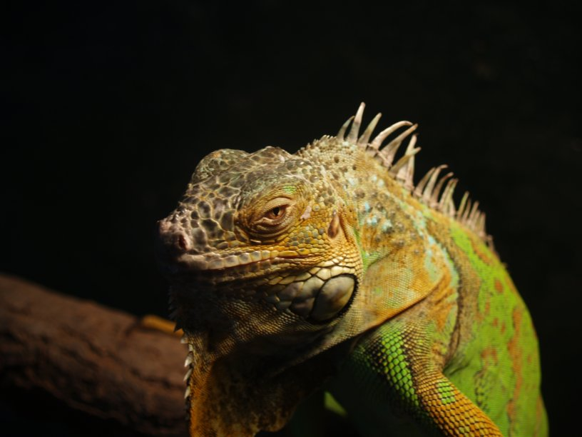 Reptiles, Equipment and Food.